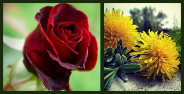 Beautiful-Red-Roses-roses-34610965-1680-1050